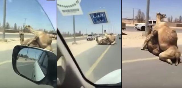 Автопати секс видео фото 93-480
