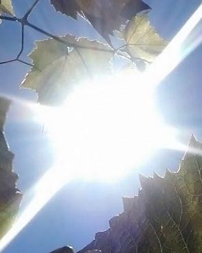 Убаво сончево време уште денеска  од утре