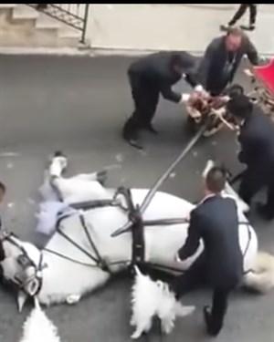 Наместо романтика  коњот им се онесвестил среде улица