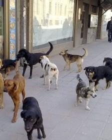 Колку париќе ви исплати град Скопје  ако ве касне улично куче