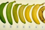 bananavid (1)