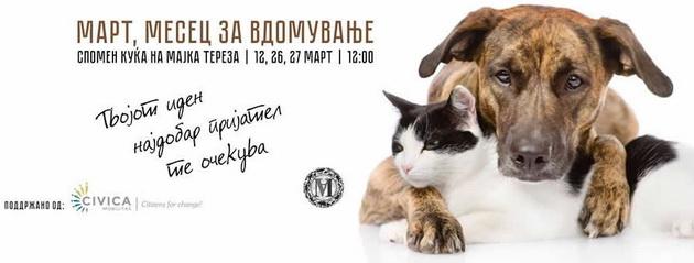 vdomi-ne-kupuvaj-vo-sabota-od-ulica-makedonija-vdomete-go-vasion-nov-najdobar-prijatel-02