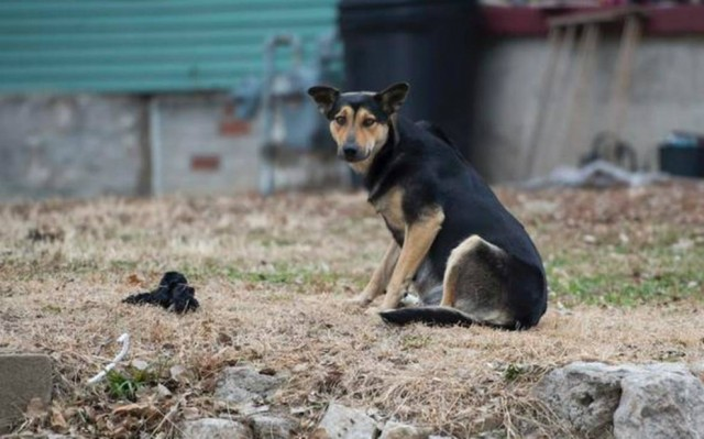 13102016112652_web_stray_dogs_20141204_slk_0111f